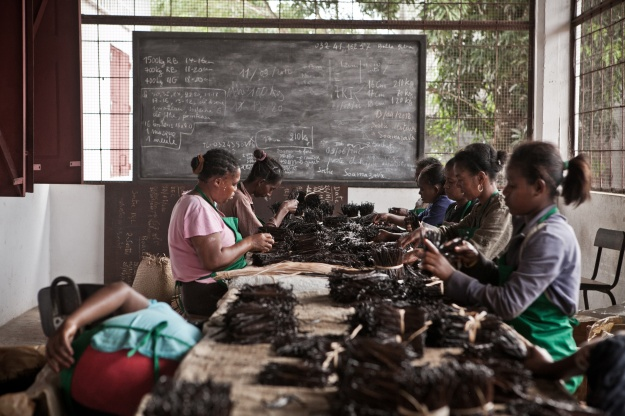 1. Workers in Sambava spread vanilla in the sun to dry it. / 2. Vanilla is sorted according to its length, quality and color.