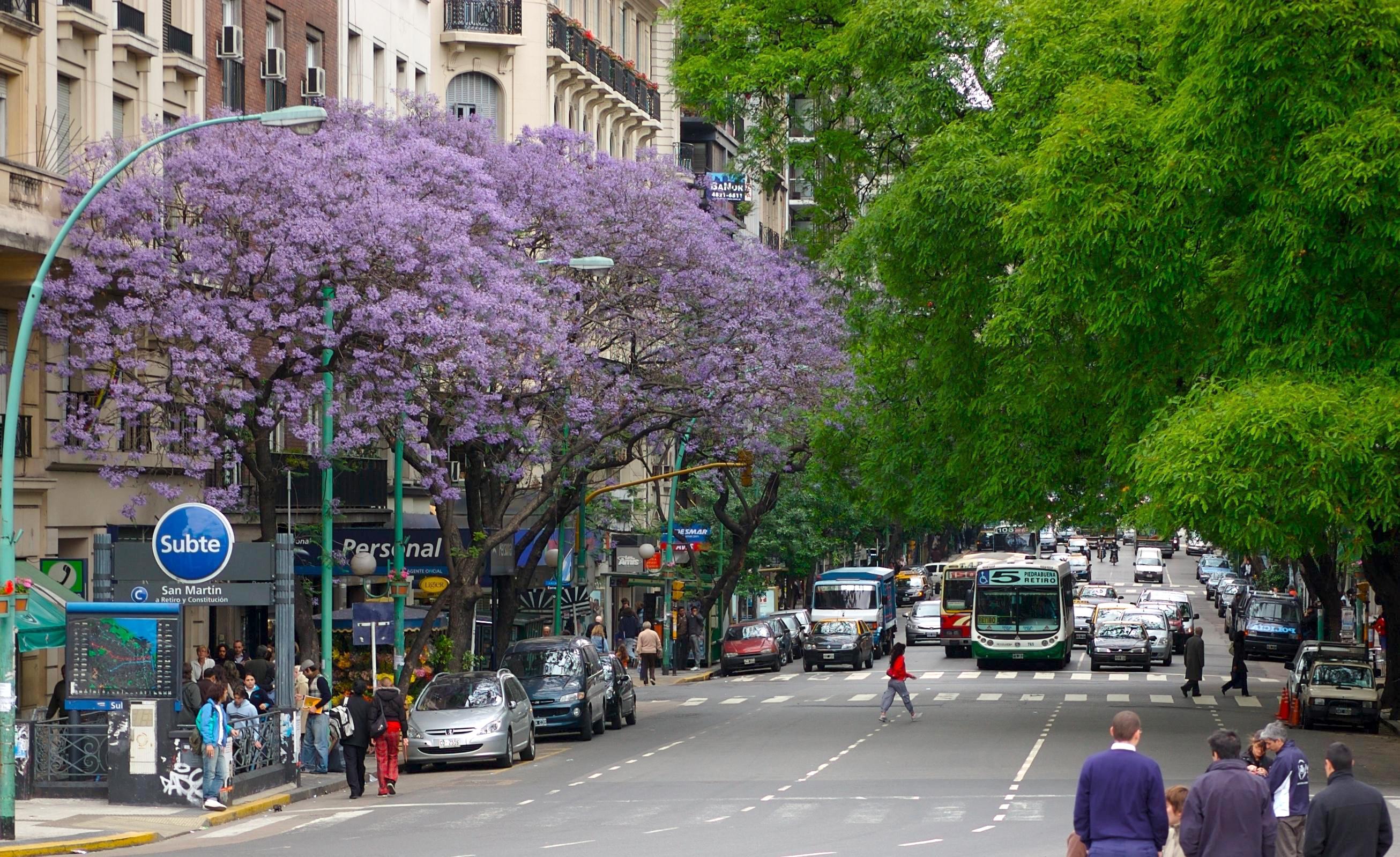 Jacaranda trees on Avenida Santa Fe in Buenos Aires. (Photo by Beatrice Murch)