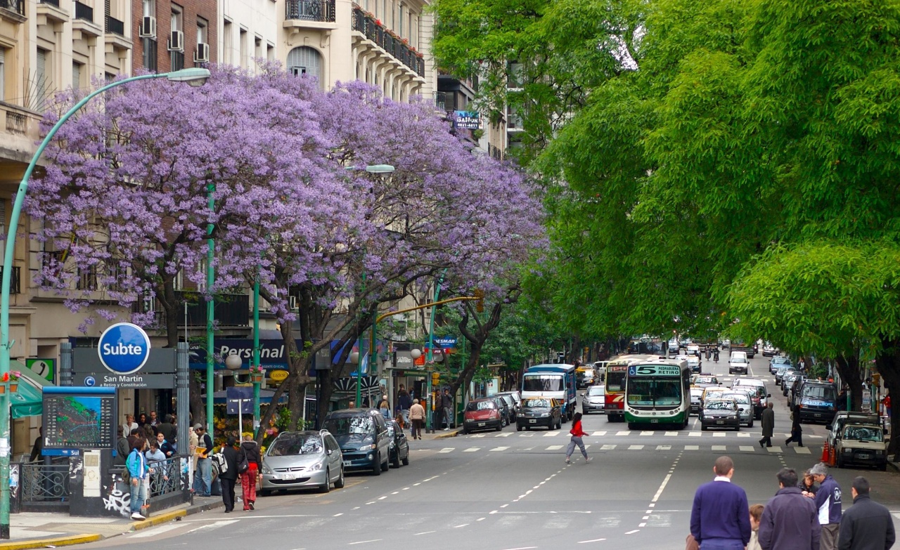 Jacaranda trees on Avenida Santa Fe in Buenos Aires. (Photo by Beatrice Murch)