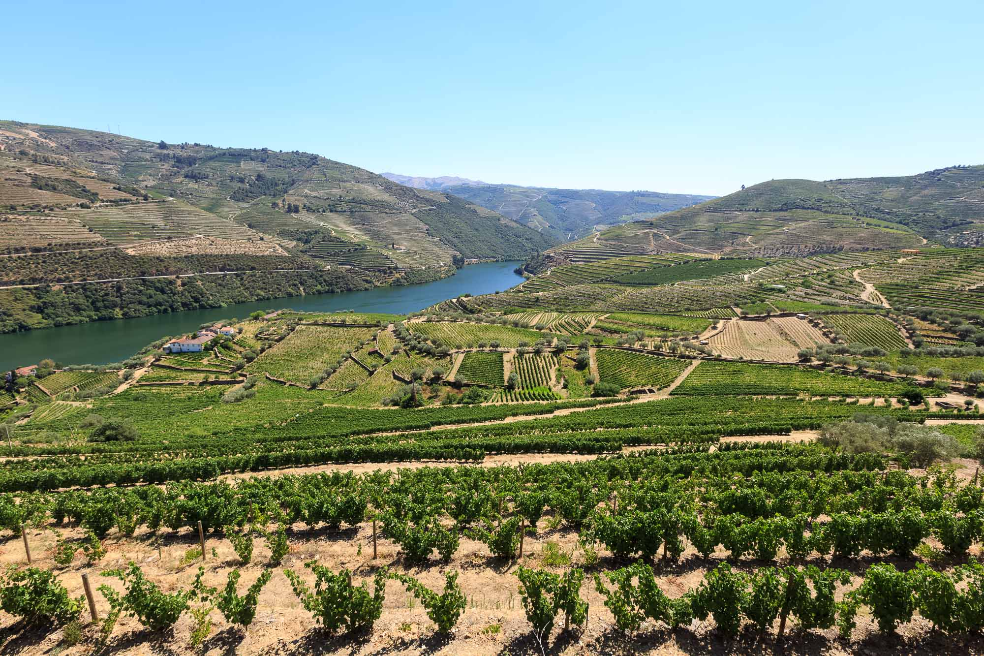 Wine terraces in the Douro Valley overlooking the river. The orientation of the vine plots depends on the grape variety and the kind of port they are meant to be turned into.