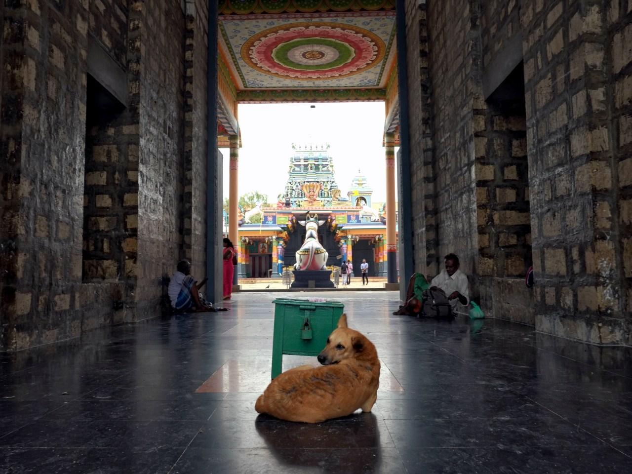 The Nagapooshani Amman Kovil in Nainathivu.
