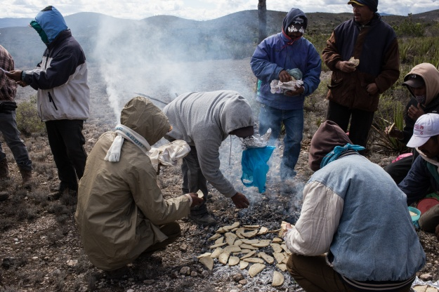 Photo 1: Francisco Rodriguez, aka Pancho Prieto, prepares to look for a new nest during a escamole collecting day of work. Photo 2: Members of the cooperative of escamoleros of Cerro Prieto, re heat tacos on mezquite wood before a day of collecting eggs on the desert highlands of the Potosi. March 10, 2016. Cerro Prieto, San Luis Potosi.