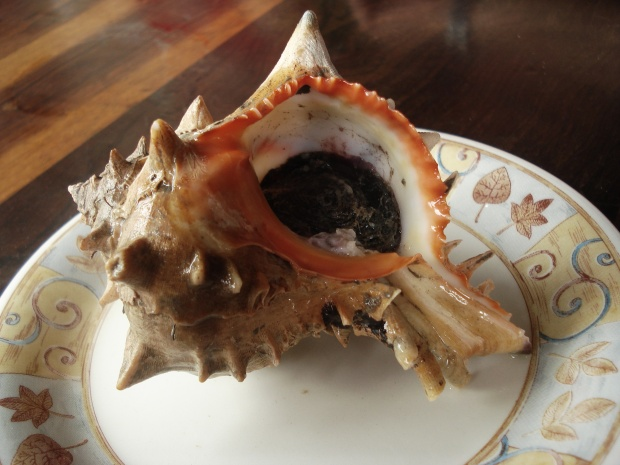 Sea snail in the shell this is used for ceviche de caracol. (Photo by ximena via Flickr)