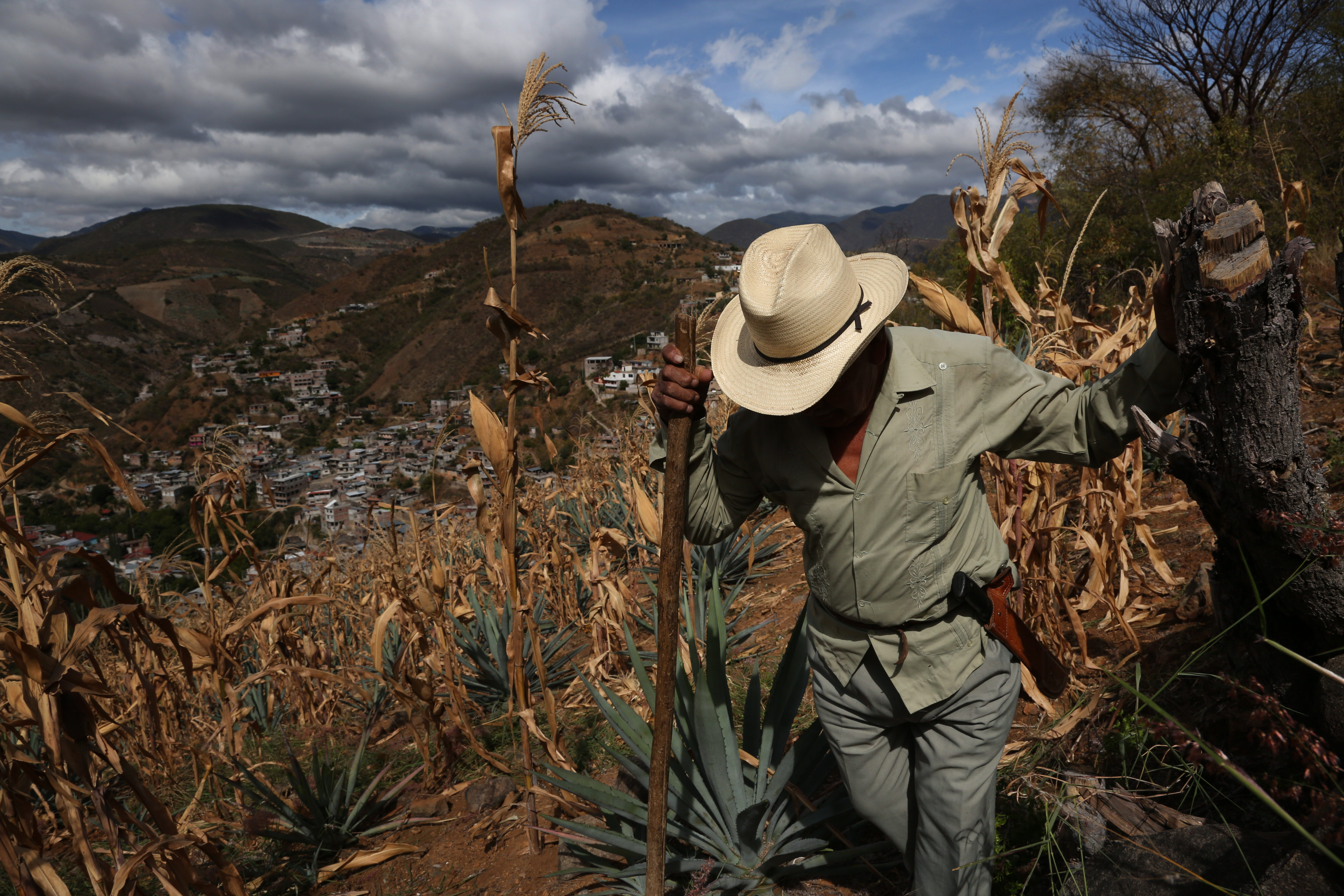 Toribio Hernandez walks through is agave fields in San Juan del Rio, Oaxaca, Mexico.