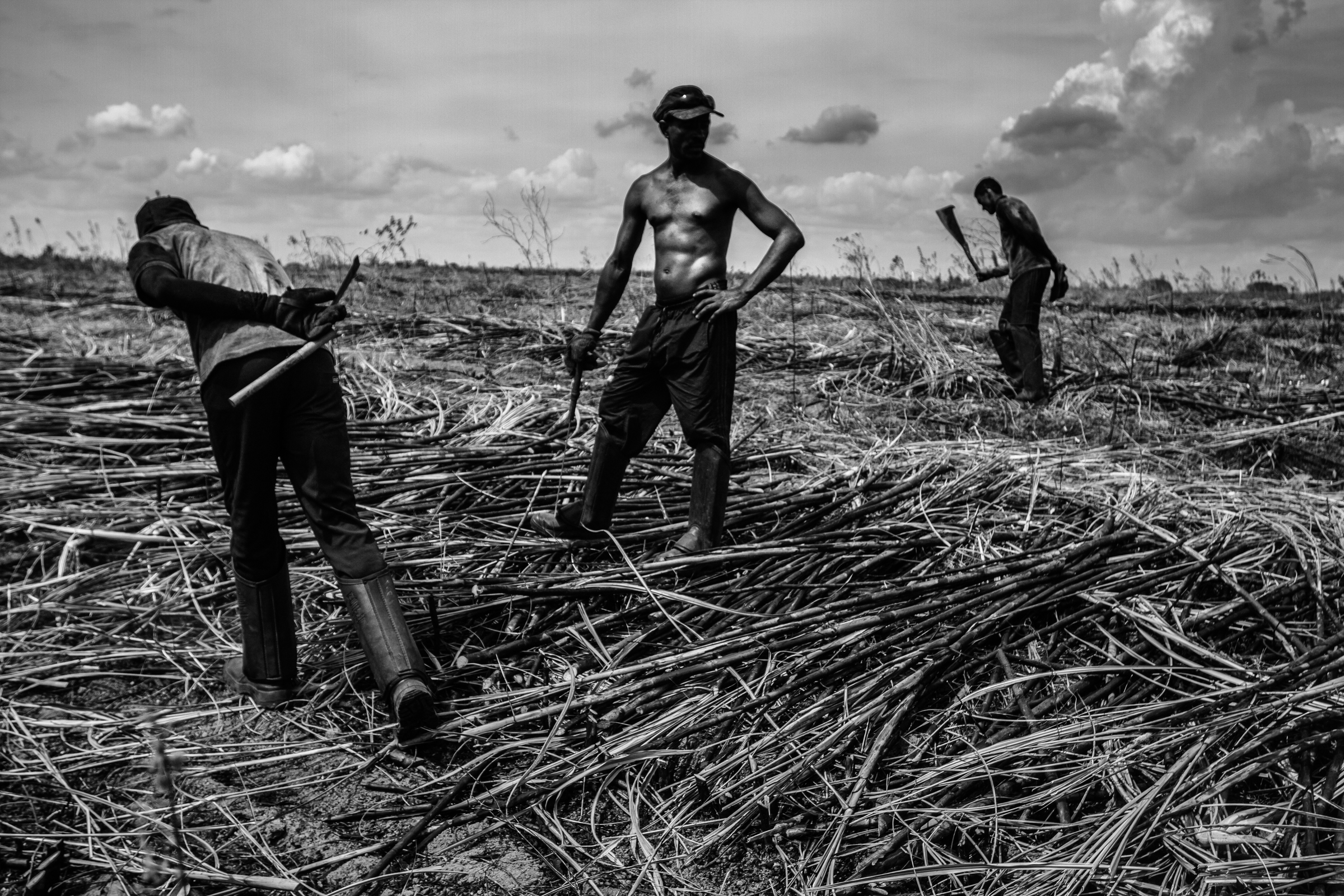 The cane cutters of Brazil