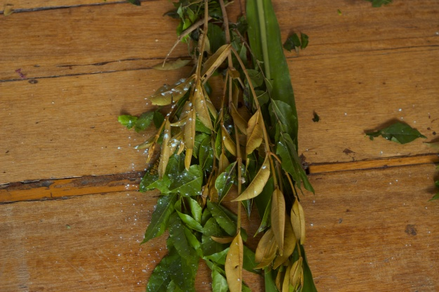 "Photo 1: Plants with names such as ""path opener,"" ""battle winner"" and ""knock it all down"" are sprinkled with pemba, roots and herbs that are  finely ground and correspond to the Orisha for which they are destined. Photo 2: Mãe Marta gathers plants to cleanse the physical, and spiritual energy of the house and its residents."