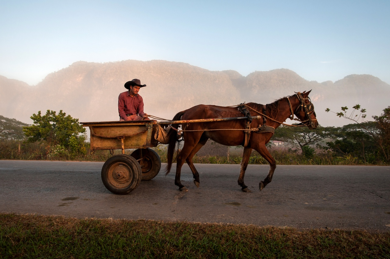 A cowboy rides his horse into Viñales in the early morning.