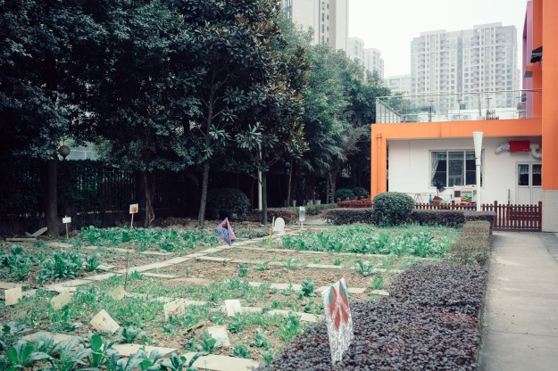 Photo 1: The curriculum at Soong Ching Ling International Kindergarten includes planting and harvesting vegetables. Photo 2: The plots at the Soong Ching Ling International Kindergarten are tended by the school children.