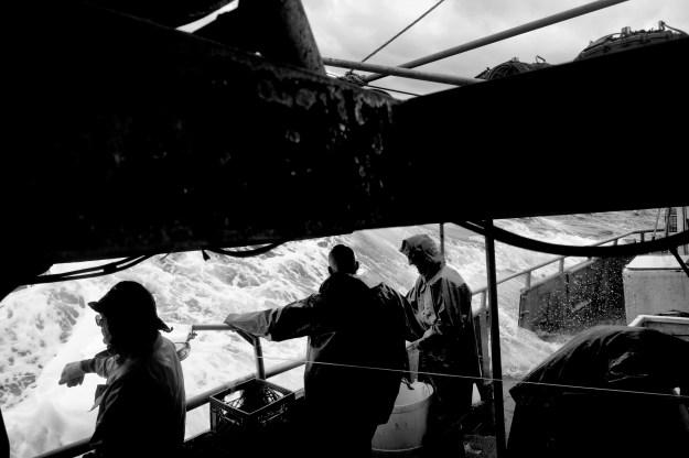1: Fishermen reel in a longline. 2: A swordfish, hooked on the longline, in the water beside the boat.