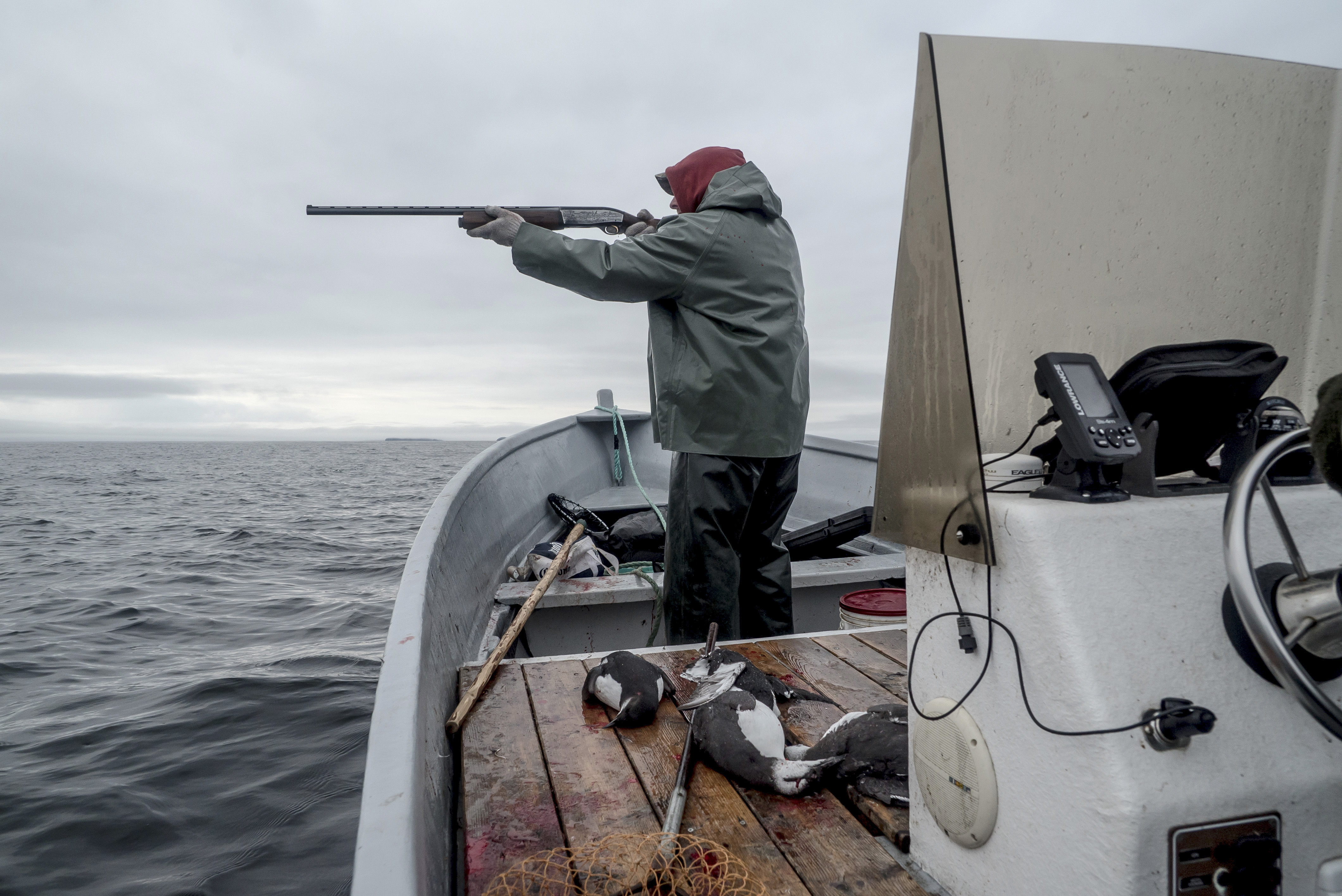 Scott Butler aims at a guillemot from the deck of his boat.