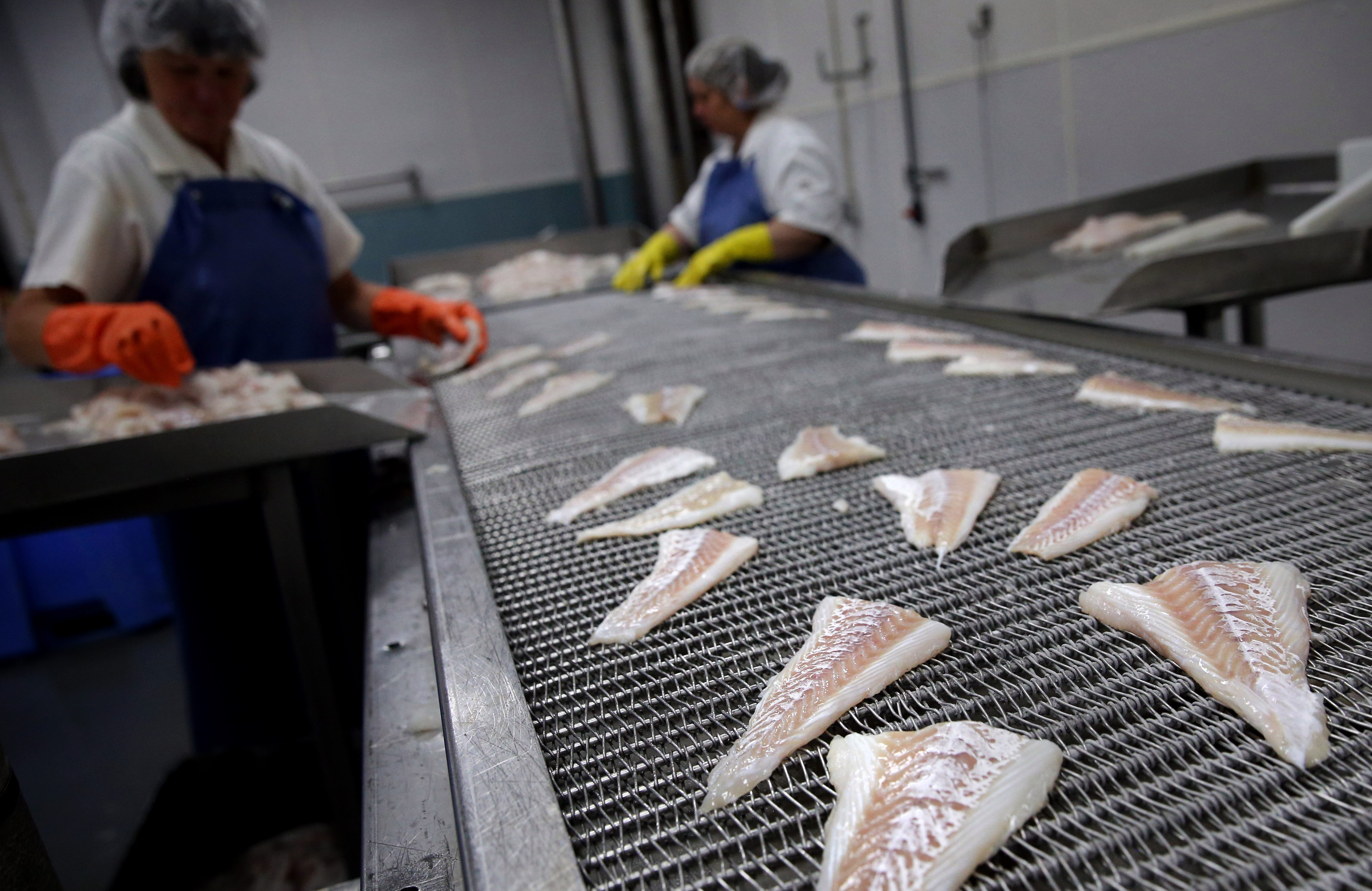 1: Fisherman Sam Lee hoists a cod from the water in Motion Bay. 2: Workers spread fillets onto a conveyor at the Icewater Seafood processing facility.