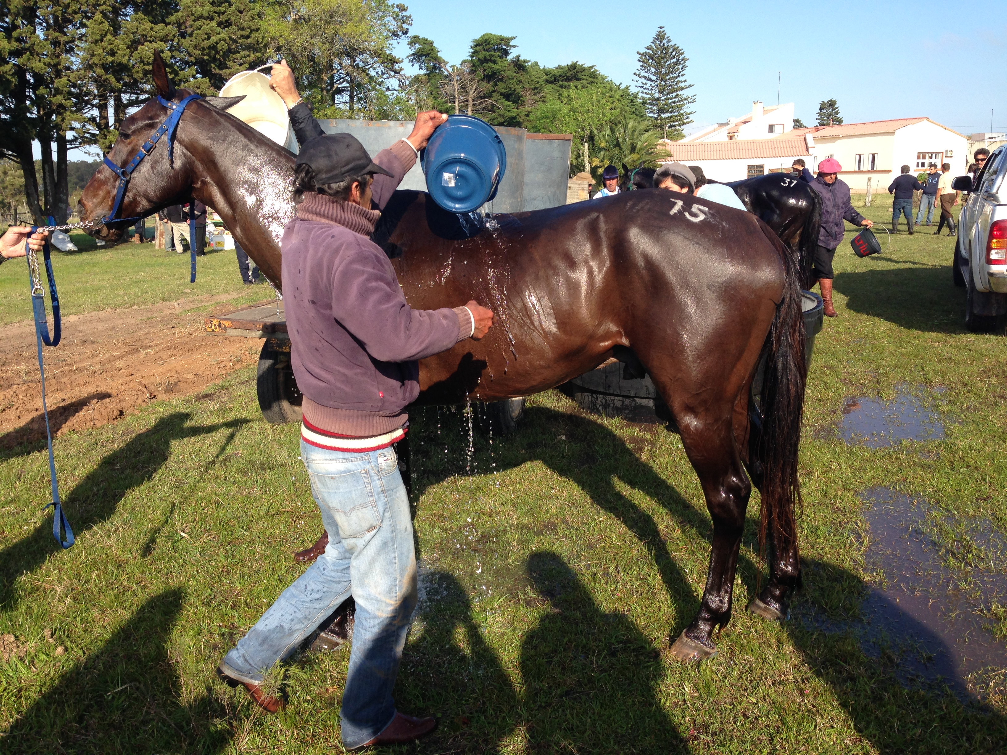 A man bathes his horse during a break in the race.