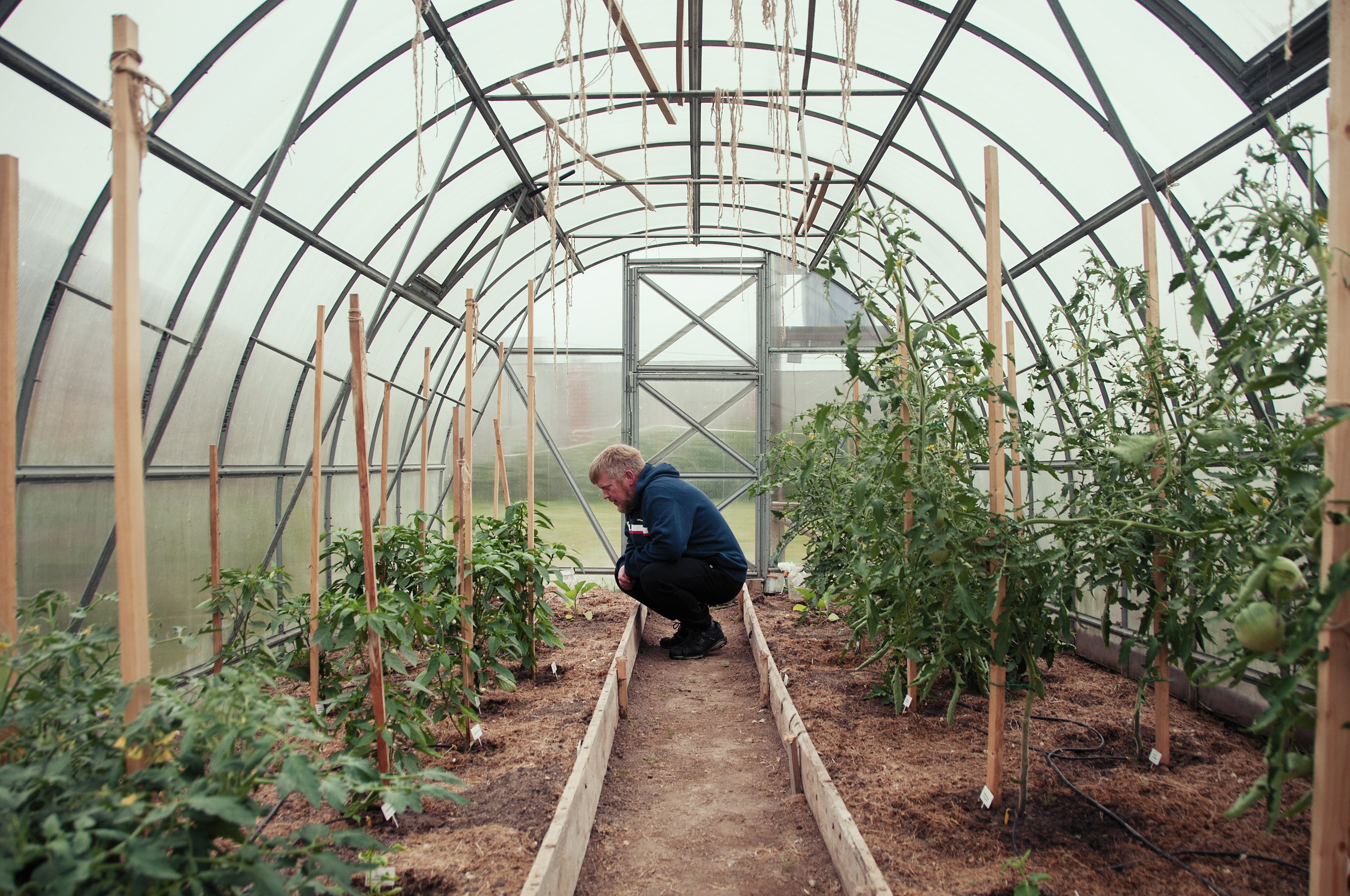 Artyukhov grows tomatoes in his private greenhouse.