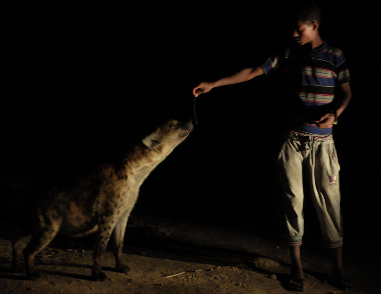 Face to face with Africa's second-largest predator.