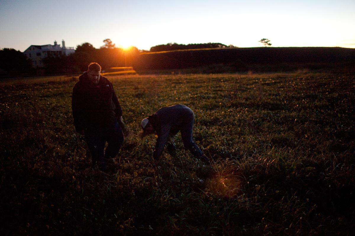 Matthew Jennings and Daniel Heinze, Chef de Cuisine at McCrady's in Charleston, forage for wild onions in the pre-dawn dark.