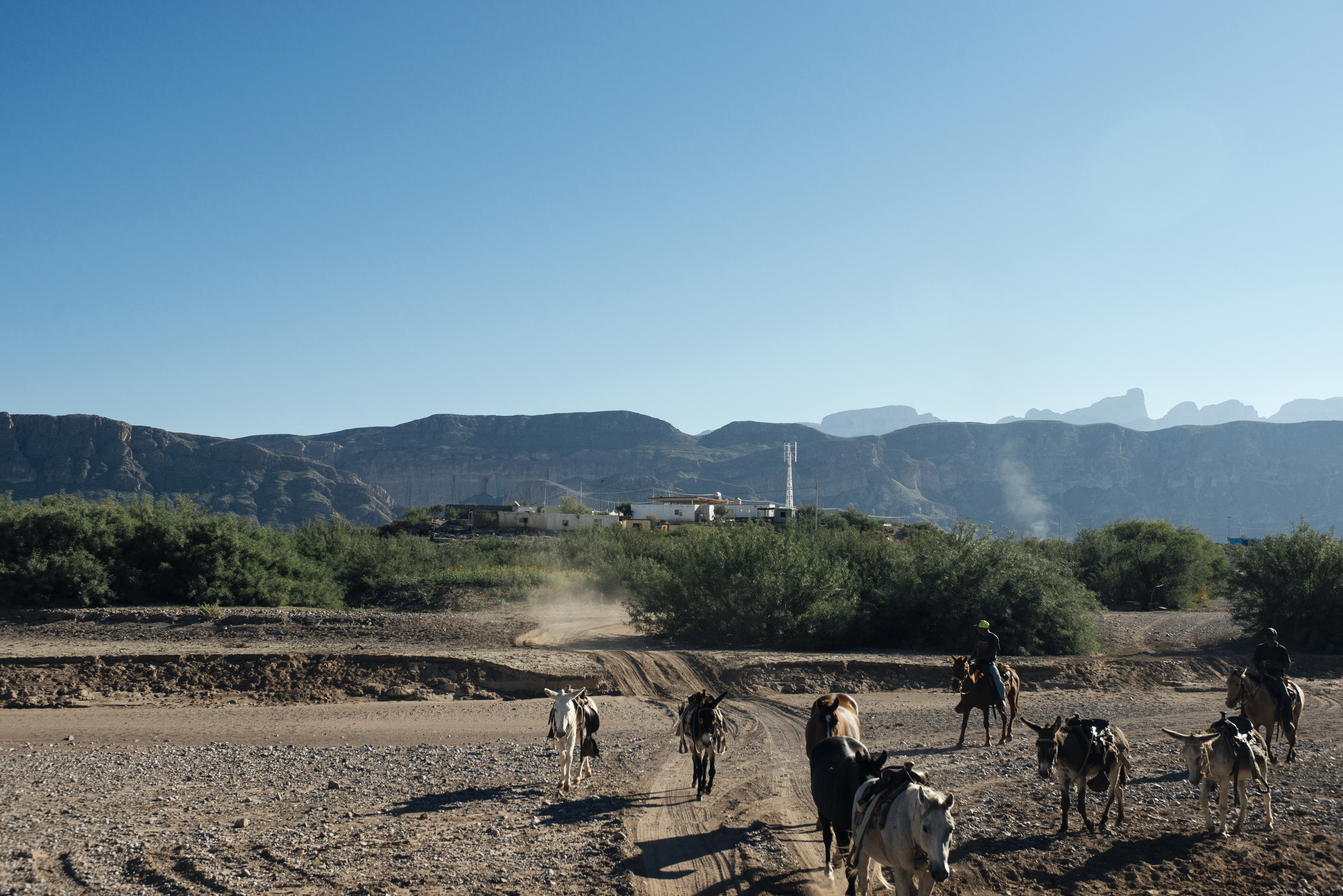 Mules and horses transport locals around Boquillas and are rented to a steady stream of tourists that visit the town.