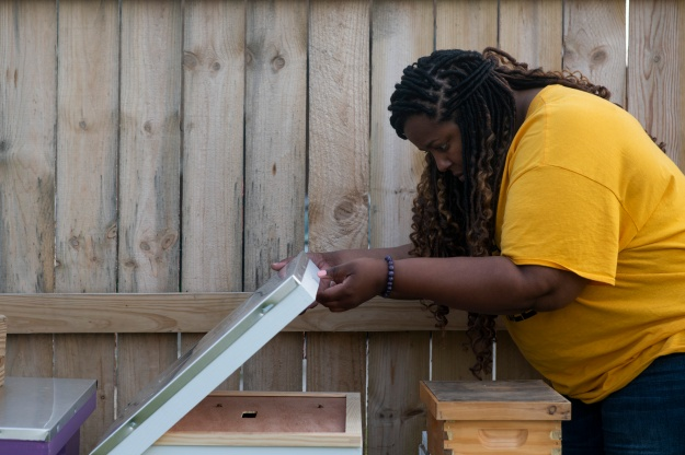 "1: Detroit Hives co-owners Nicole Lindsey and Timothy ""Paule"" Jackson installs leaf cutter bees. 2: Lindsey looks in one of her hives."