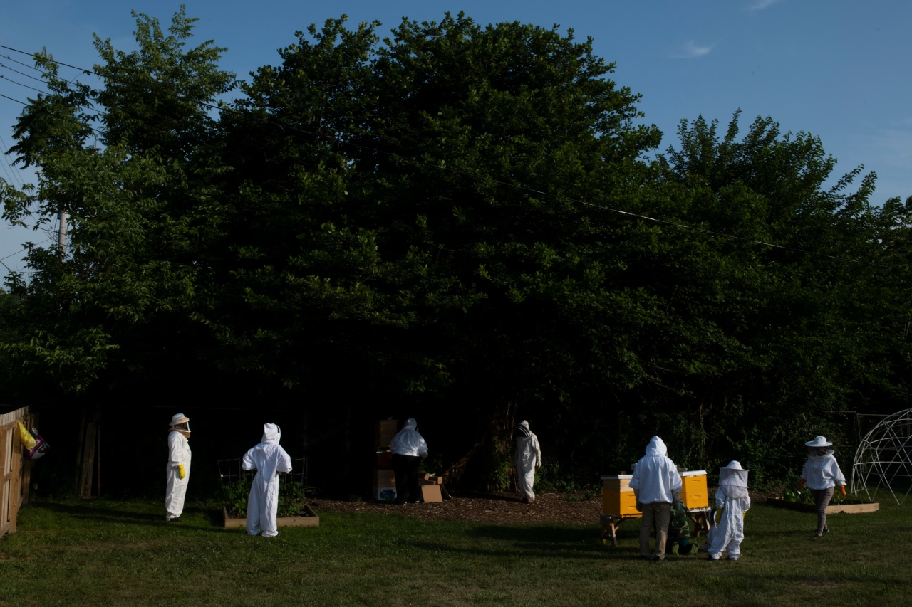 Members of a tour walk around the bee farm.