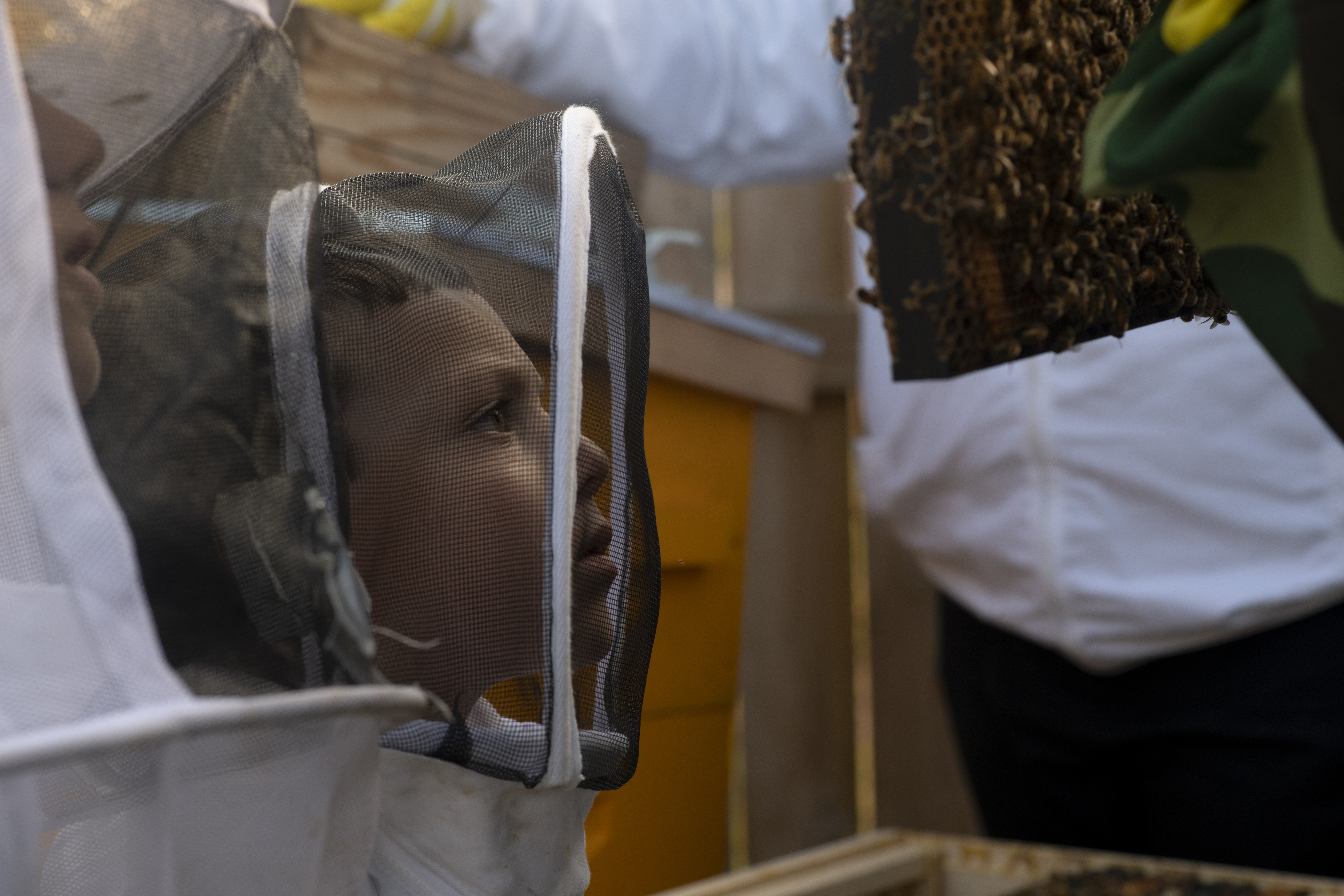 Lucas Plotkin, 6, of Brooklyn, New York, looks at a frame of bees during a tour of the farm.